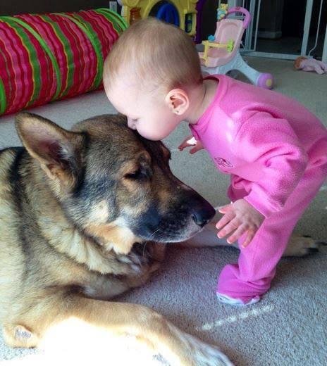 babies-need-pets-18