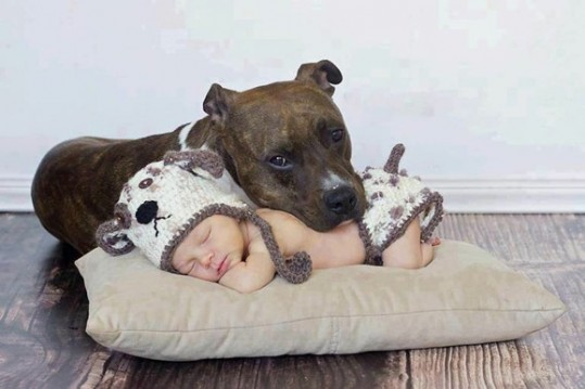 babies-need-pets-2