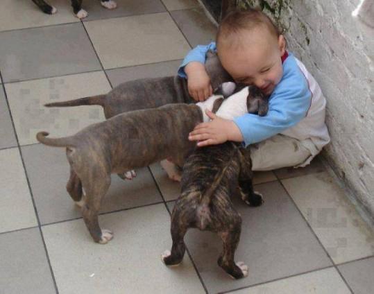 babies-need-pets-23