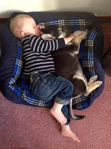babies-need-pets-6