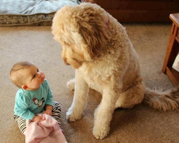 babies-need-pets-7