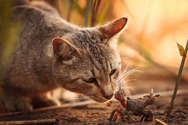 beautiful-cat-pictures-1