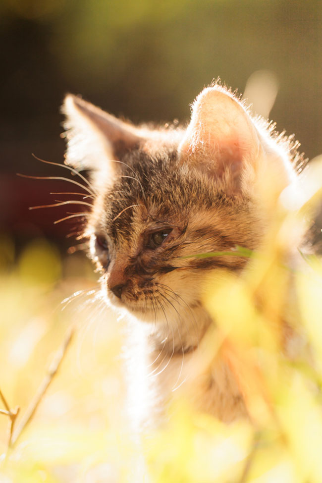 beautiful-cat-pictures-10