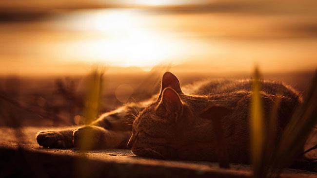 beautiful-cat-pictures-12