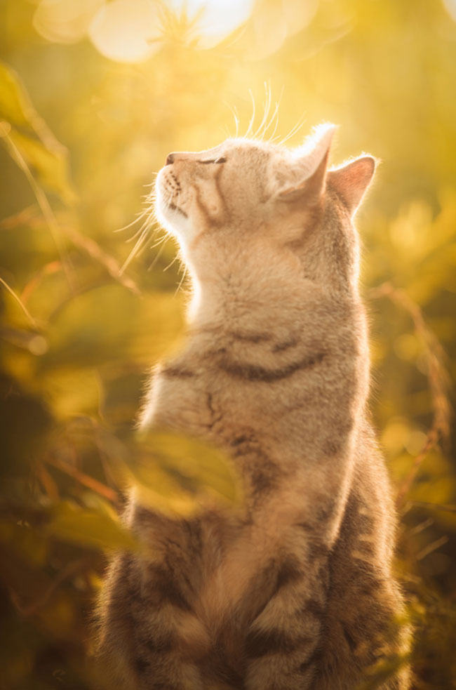 beautiful-cat-pictures-13