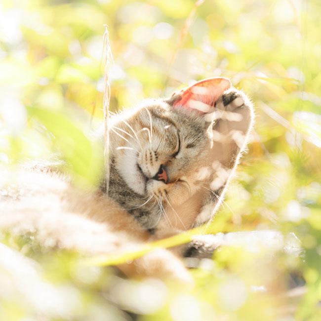 beautiful-cat-pictures-14