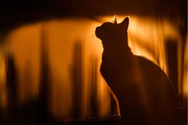 beautiful-cat-pictures-15