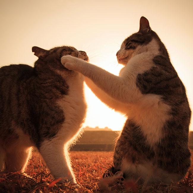 beautiful-cat-pictures-16