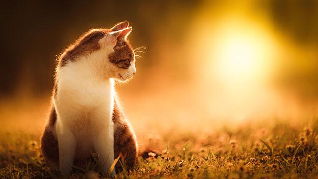 beautiful-cat-pictures-17