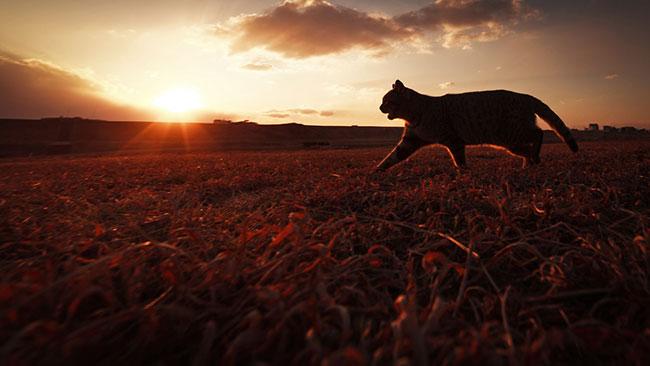 beautiful-cat-pictures-18