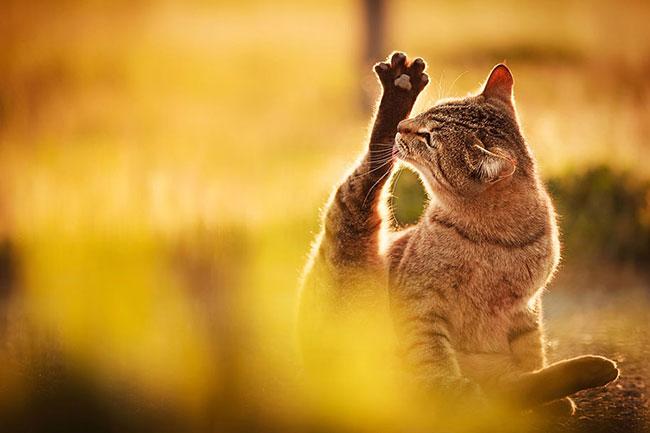 beautiful-cat-pictures-2