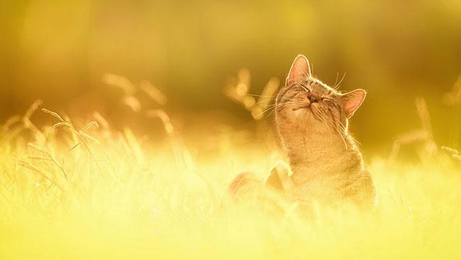 beautiful-cat-pictures-3