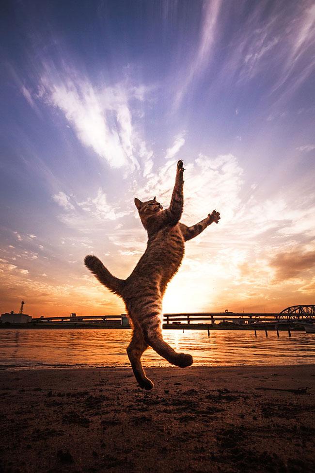 beautiful-cat-pictures-4