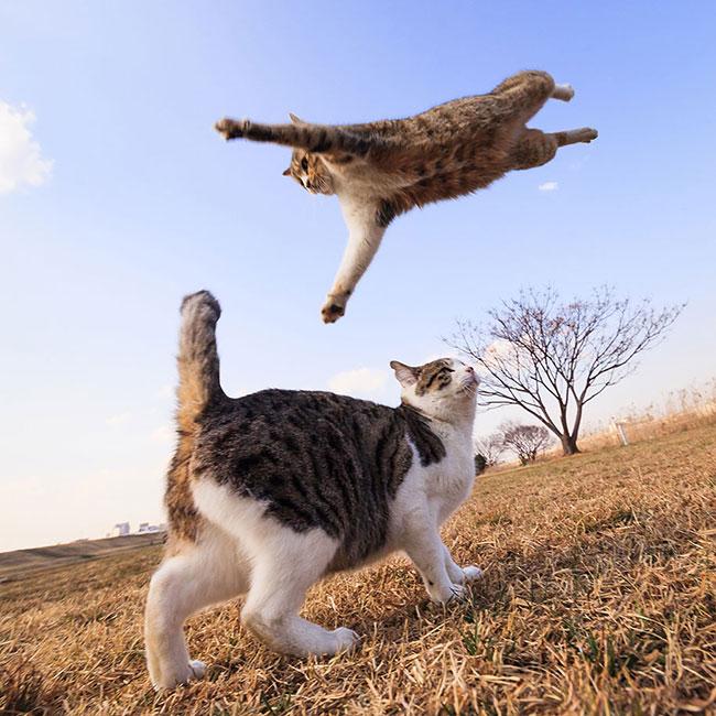 beautiful-cat-pictures-5