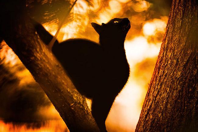 beautiful-cat-pictures-6
