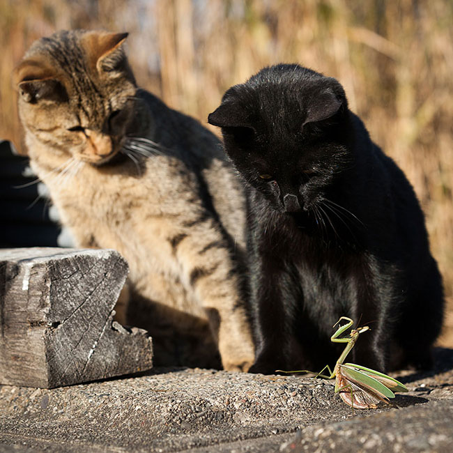 beautiful-cat-pictures-7