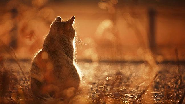 beautiful-cat-pictures-8