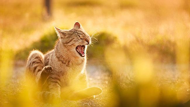 beautiful-cat-pictures-9