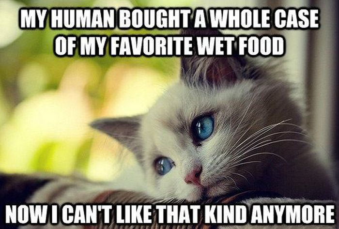 Cat Logic Food