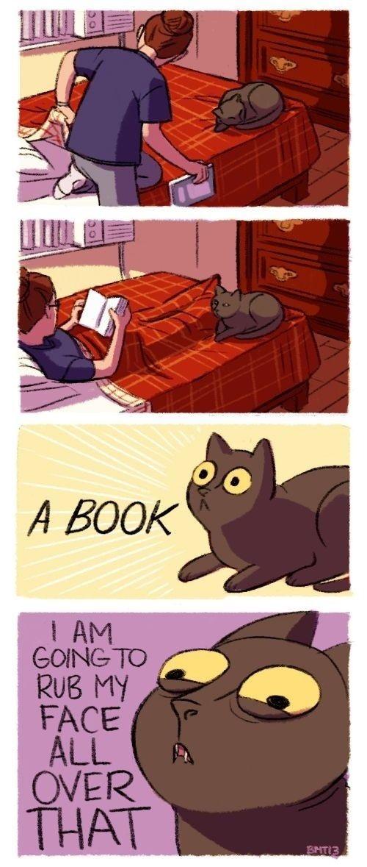 cat-owner-15