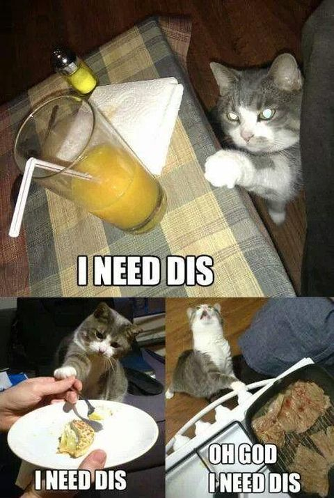 30 Hilarious Struggles Only Cat Owners Will Understand