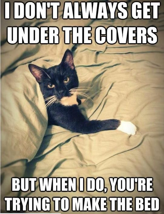 Hilarious Struggles Only Cat Owners Will Understand - 26 funniest wet cats pictures