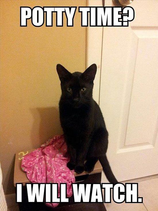 cat-owner-3