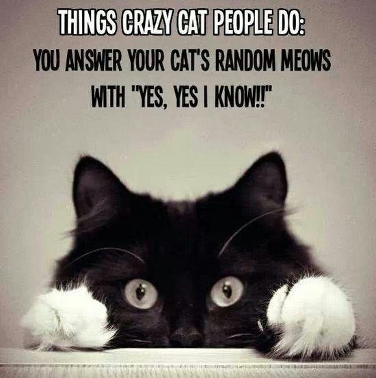 cat-owner-5