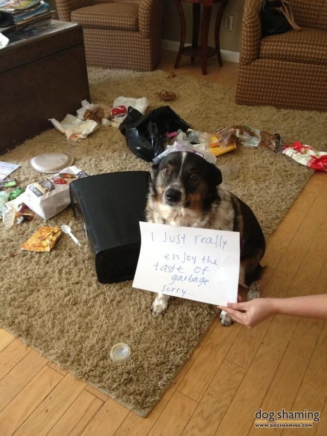 naughty-dogs-cats-confessing-crimes-17