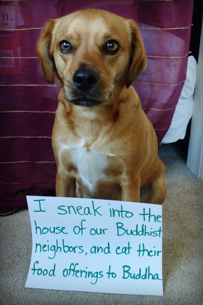 naughty-dogs-cats-confessing-crimes-2