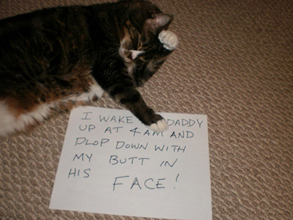 naughty-dogs-cats-confessing-crimes-30