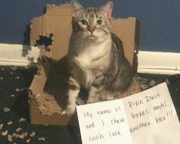 naughty-dogs-cats-confessing-crimes-34