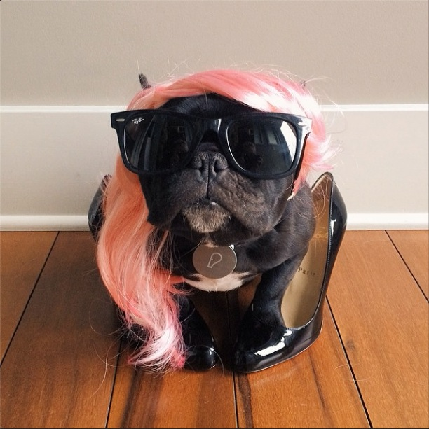 trotter-fashionable-pup-1