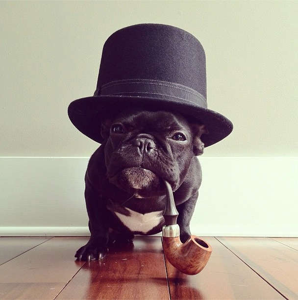 trotter-fashionable-pup-10