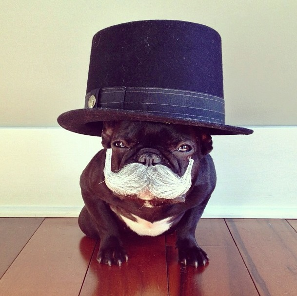 trotter-fashionable-pup-12