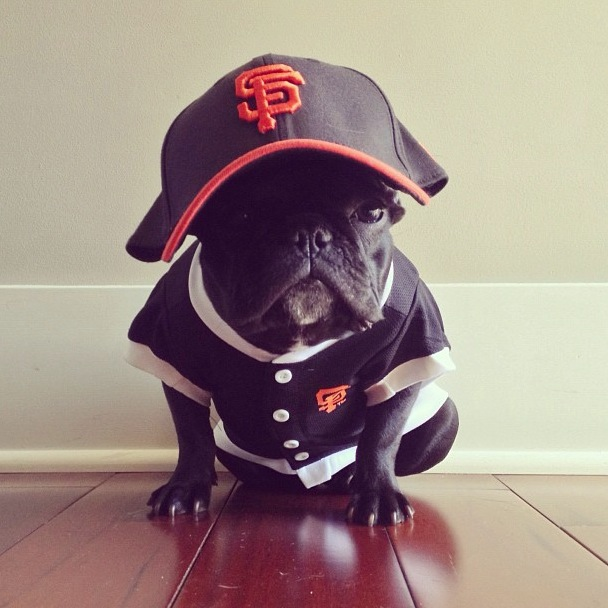 trotter-fashionable-pup-14