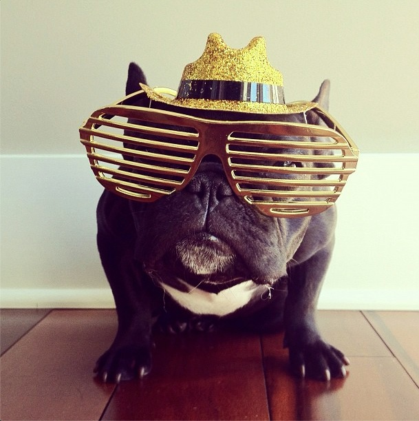 trotter-fashionable-pup-15