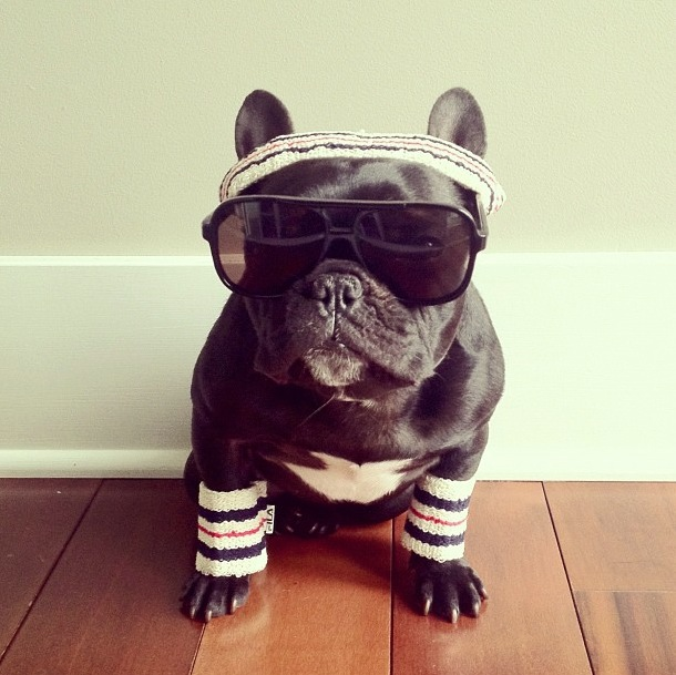 trotter-fashionable-pup-16