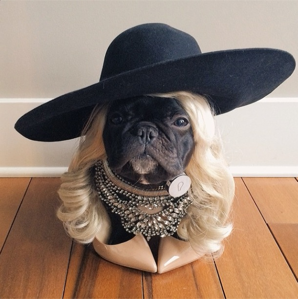 trotter-fashionable-pup-2