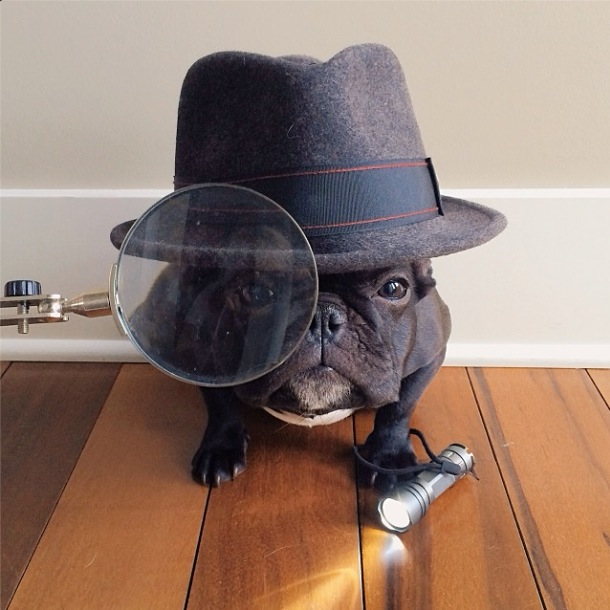 trotter-fashionable-pup-3