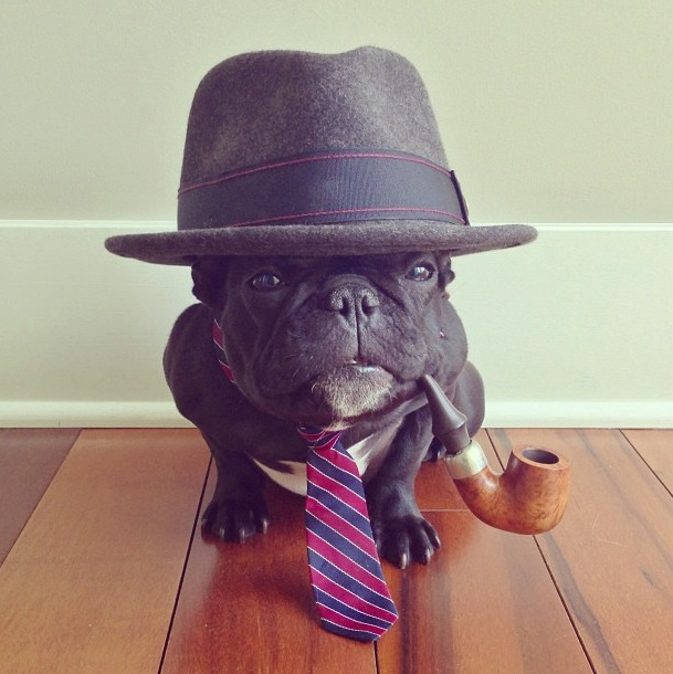trotter-fashionable-pup-6