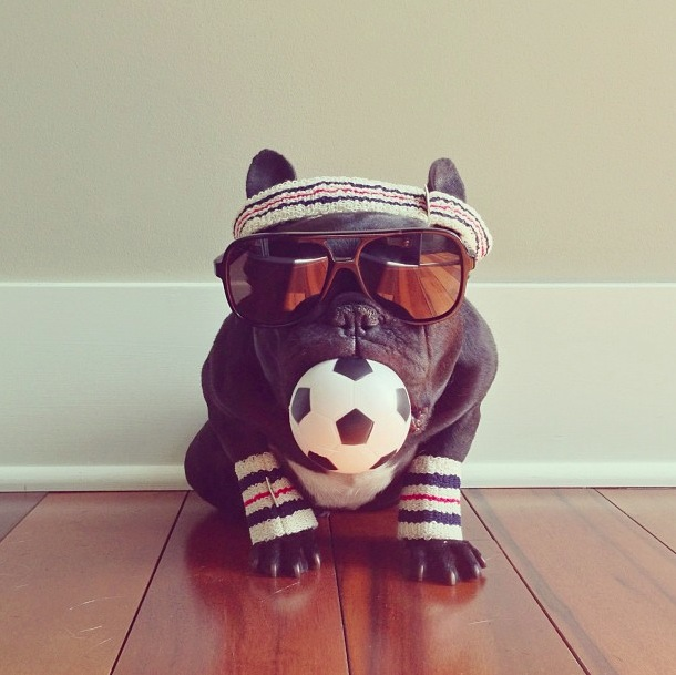 trotter-fashionable-pup-8