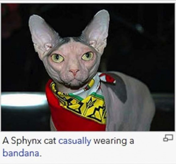 wikipedia-ridiculous-captions-10