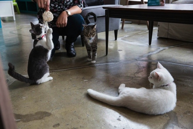 cat-cafe-13