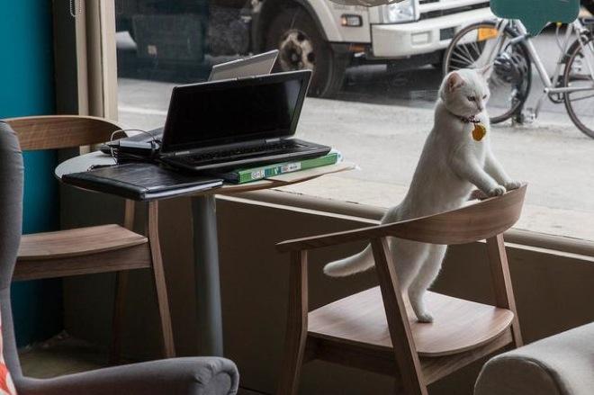 cat-cafe-3
