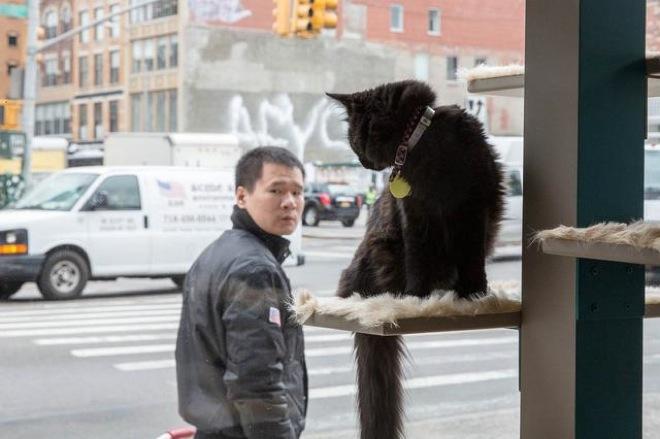 cat-cafe-6