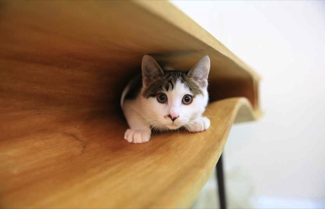 cat-table-2