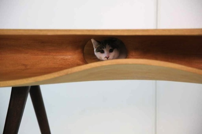 cat-table-3