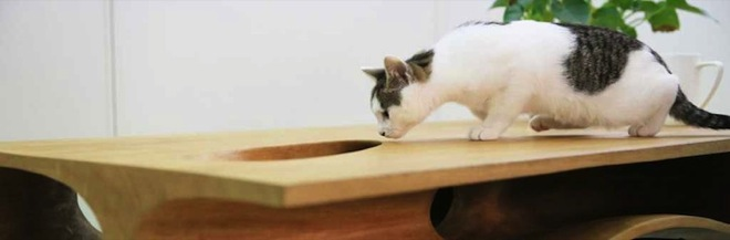 cat-table-4