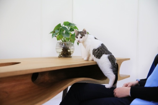 cat-table-7